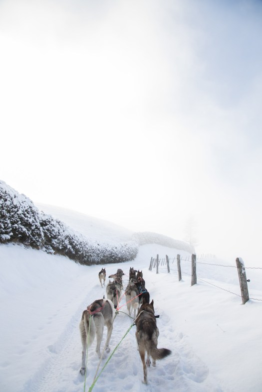 Glamping Blog News 8 Winter Activities Dog Sledding - Kristen Kellogg