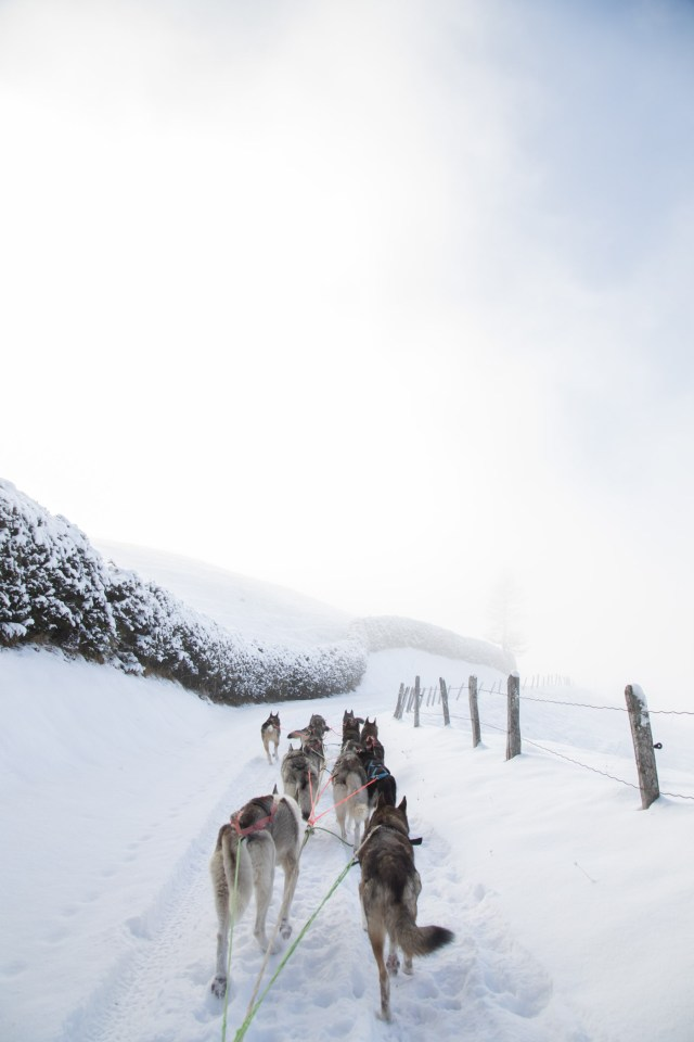 Glamping Blog News 8 Winter Activities Dog Sledding - Kristen Kellogg