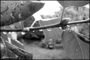 Météo intérieure. On peut pas toujours bien aller... (Jardin derrière la maison, Lyon, septembre 2003.)
