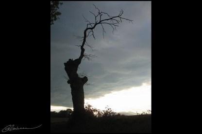 Still standing. (Campagne craponnoise, novembre 2003.)