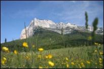 Je veux ça dans mon jardin ! (Le Granier (1933m), France, juin 2006)