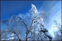 Blue Winter. (Massif du Sud, Québec, décembre 2007)