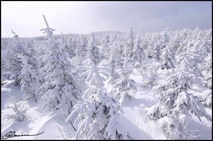 En ski de fond, par un temps glacial. (Massif du Sud, Québec, janvier 2009)