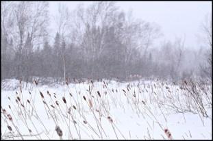 Que-nouille... (St-Méthode, Québec, février 2010)