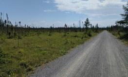 Piste en poussière de roche du Parc national de Pointe-Taillon, au coeur de la pointe