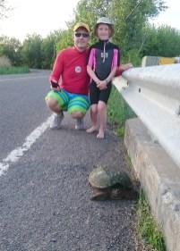 Rencontre avec une tortue serpentine! (Châteauguay, Québec, juin 2016)