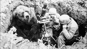 Bear_300