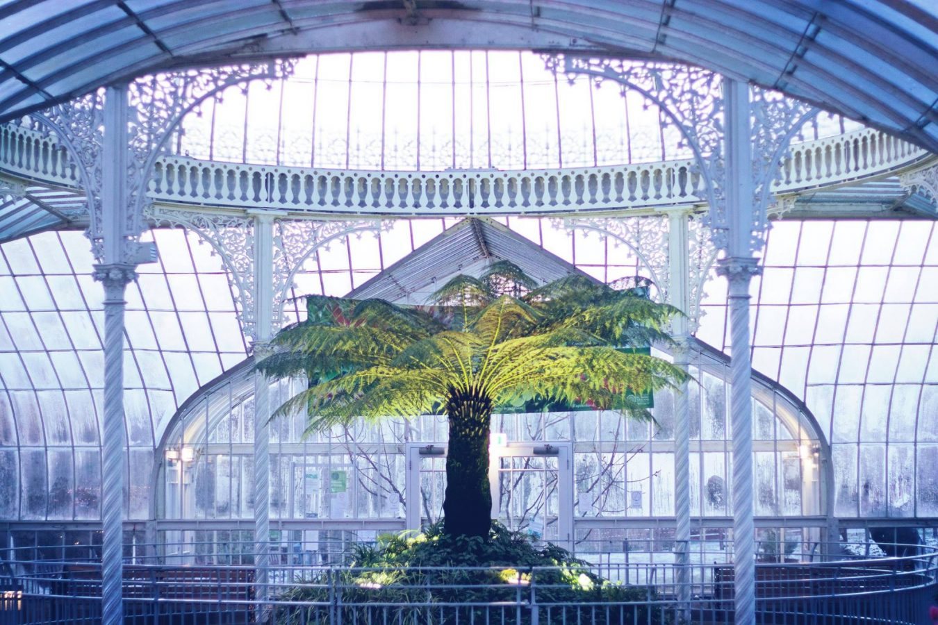 Kibble Palace view of tree and pond-2