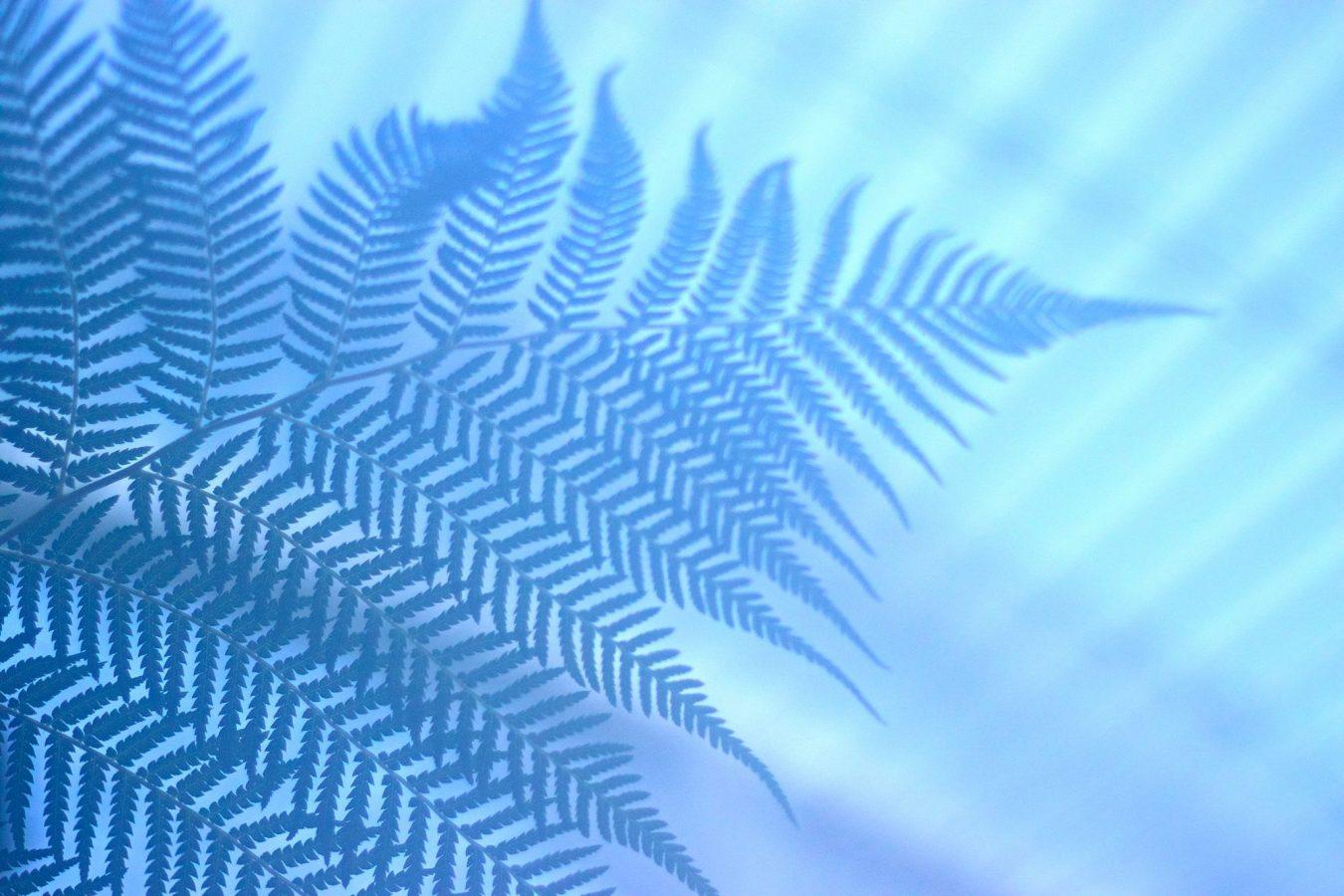 Tree fern in the Kibble Palace