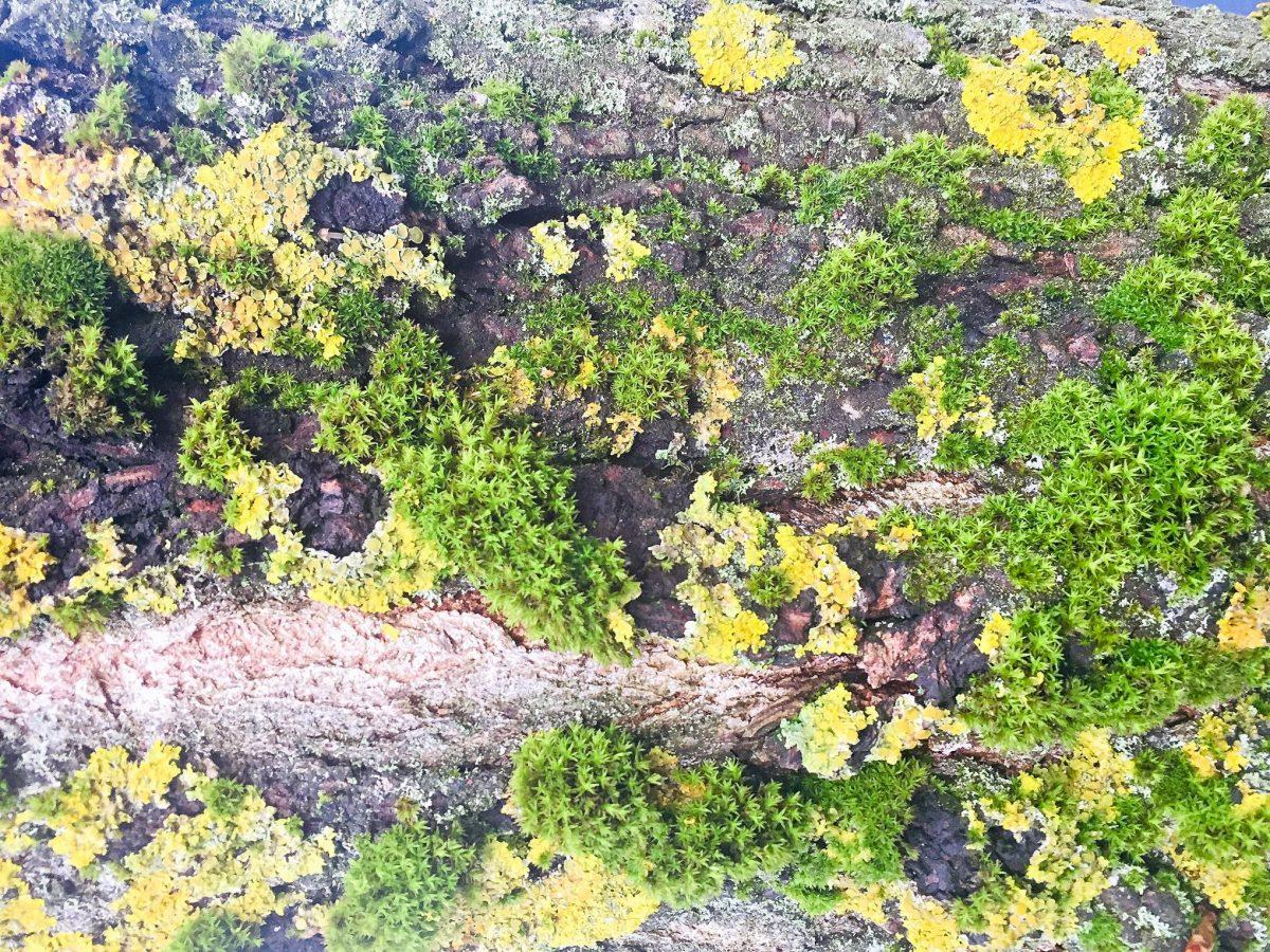 Tree bark and moss