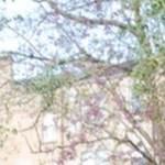 cropped-header-ygl3