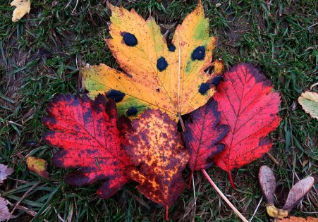 Autumn Leaves in Glasgow
