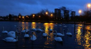 Nightfall. The Swan Pond