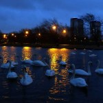 Nightfall. The Swan Pond
