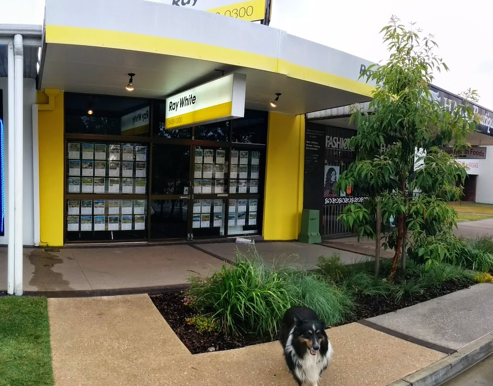 Ray White Real Estate Beerwah and Buster 2014
