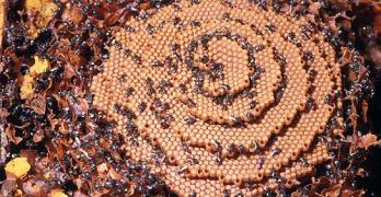 Introduction to Stingless Bees by van Veen Organics