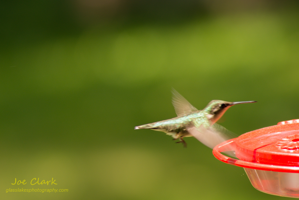 Hummingbird by Joe Clark www.glasslakesphotography.com