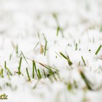 Snow in the grass spring Joe Clark Photographer