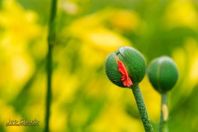 Emergence botanical photography petoskey northern Michigan