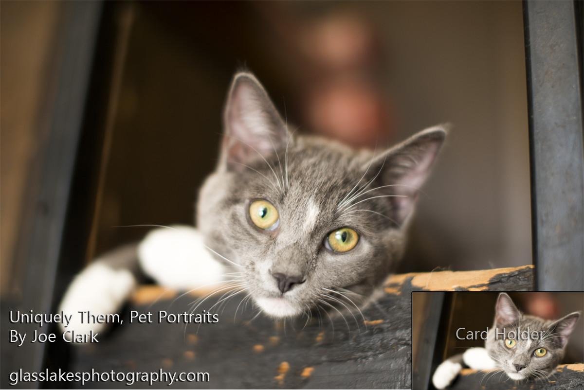new portrait advertisments joe clark petoskey photographer