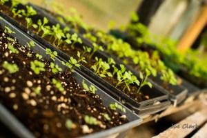 Leafing plants in a green house by Joe Clark.