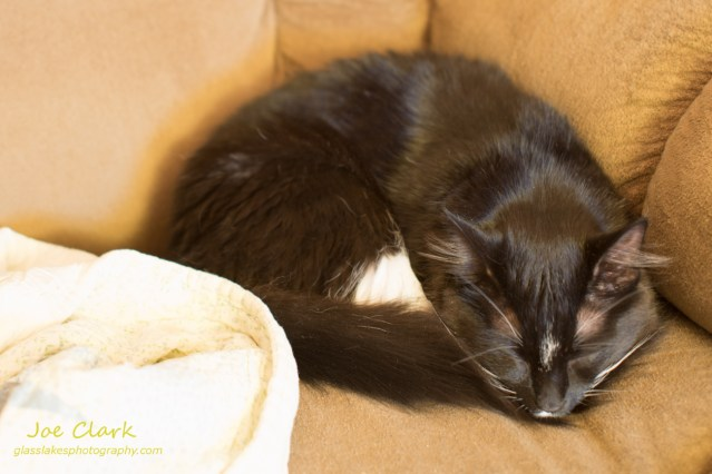 Sleeping Kitten. By Joe Clark.