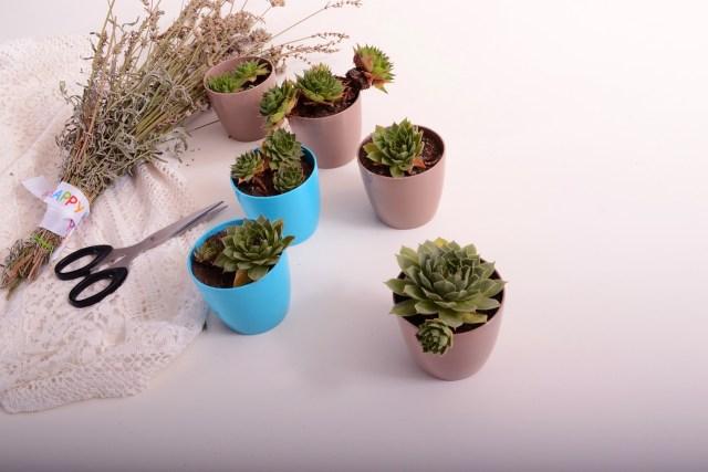 gift an indoor gardening kit this children's day