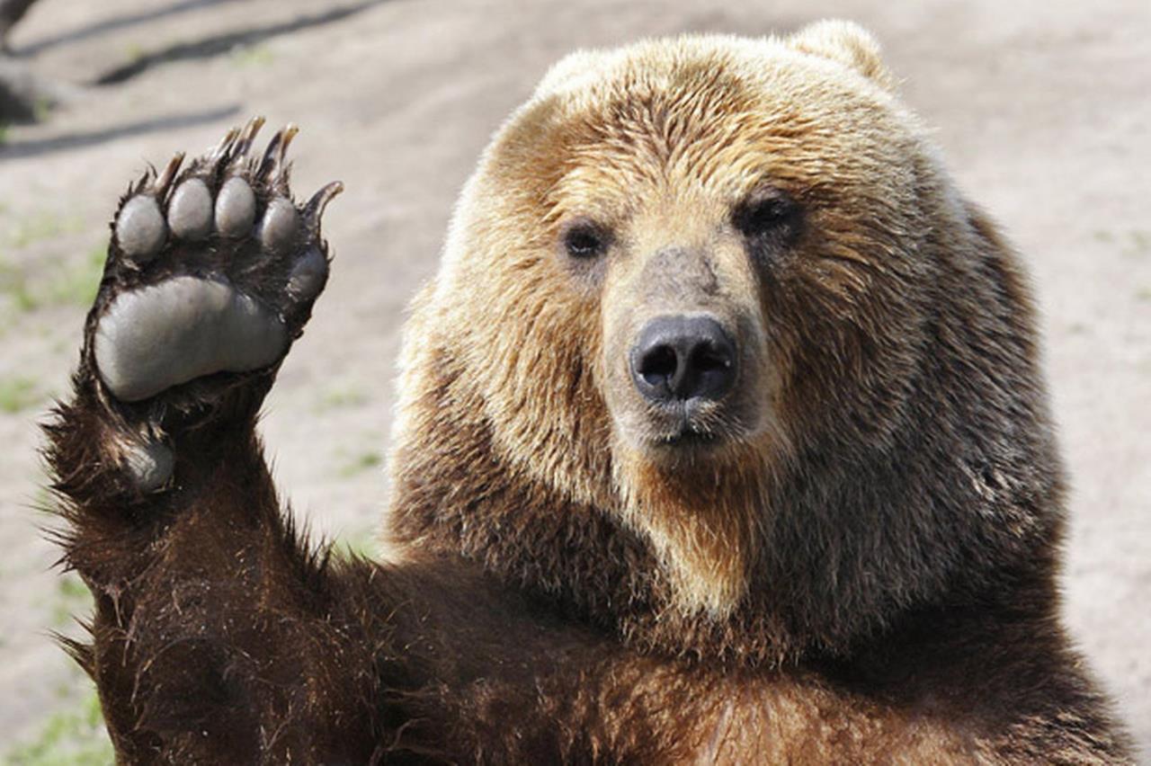 bear safety information city