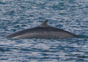 Image result for whale near skye