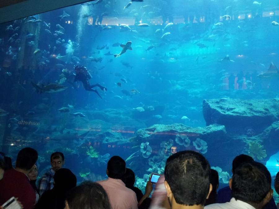 Dubai: SHARKS IN THE MALL (3)