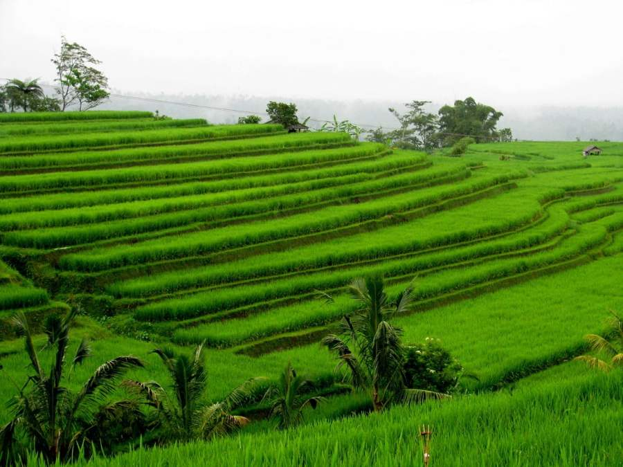 Bali Indonesia: FOOD, VOLCANO AND RICE FIELDS (7)