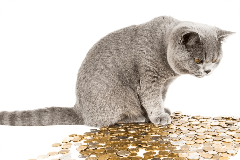 money saving pet owner tips