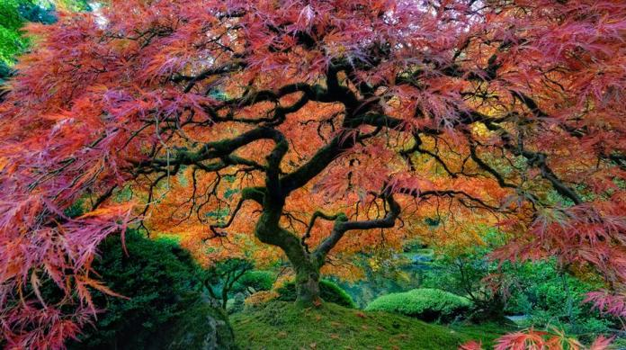 Most Beautiful Trees Photography