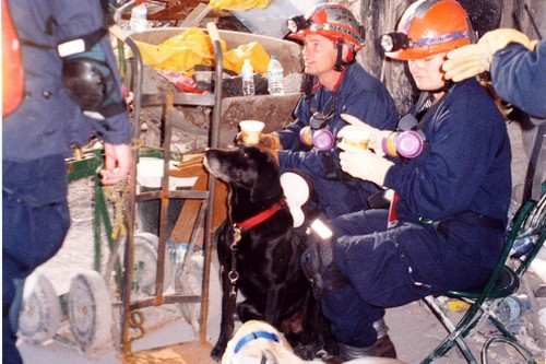 Most Famous Dogs Rescue Team of 9-11