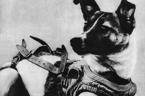 Laika Most Famous Dogs