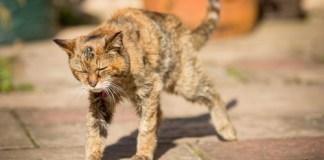 Animals Who Lived an Exceptionally Long Life