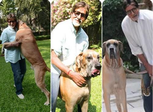 Amitabh Bachchan with dog