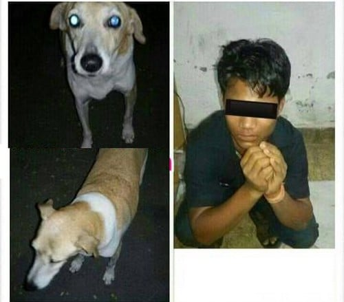 Man held for sexual act on dog