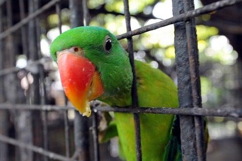 The parrot, named Hariyal