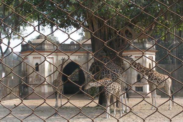 Zoological Gardens India