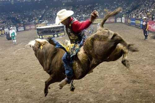Bull Riding Most Dangerous Sports