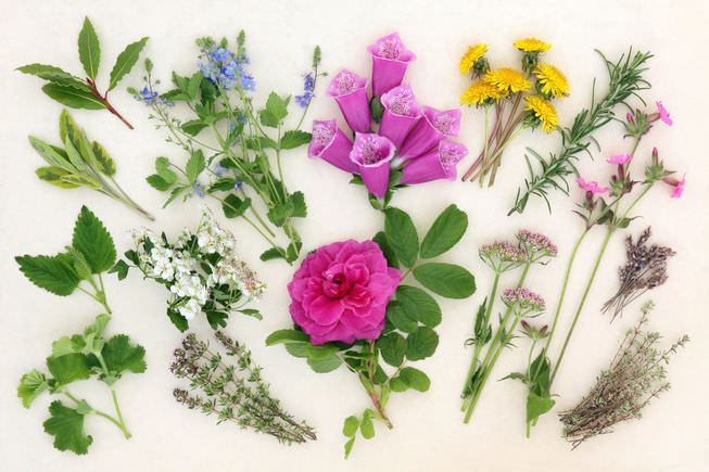 10 Healing Herbs and Plants from Your Garden