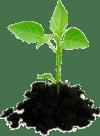 Global-Enviro-plante-med-jord