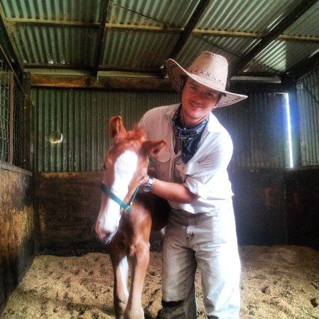 australian farm work wwoofing foal