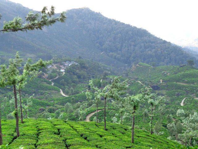 Stunning views over the tea plantations of Munnar
