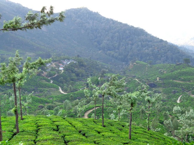 Stunning views over the tea plantations of Munnar