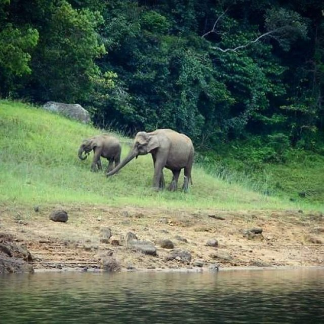 Spotting an elephant in the wild at Wayanad