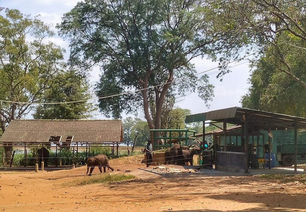 elephant transit home feeding sri lanka