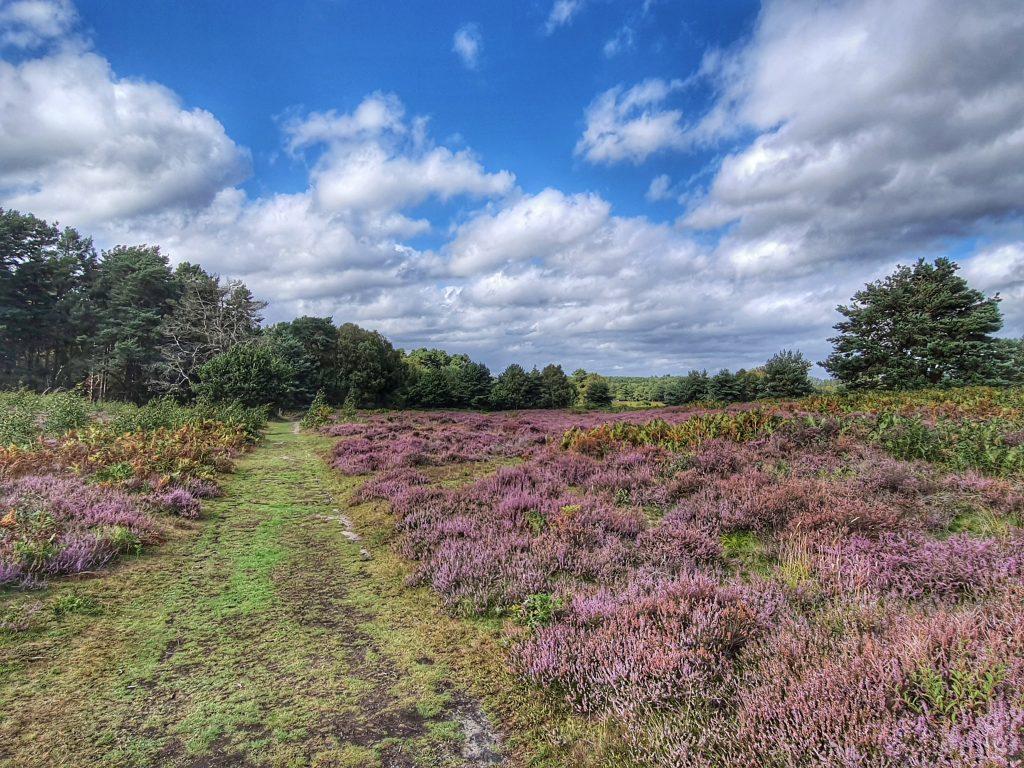 knettishall heath, suffolk