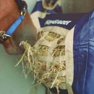 Blue Bag Eating